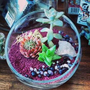 Succulent-Terrarium-3