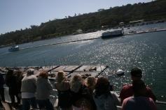 sea lion views